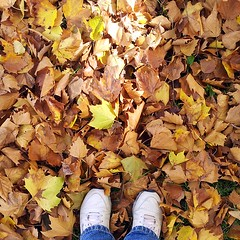 Fall has fallen. (22nd frame) Tags: autumn oktober fall leaves gold laub herbst gelb squareformat braun lookingdown quadrat mytwofeet fromwhereistand uschikoethe instagram schuheimbild