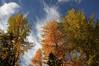 Larch trees, fall sunrise @ Graubünden, Swiss Alps. (Richard Verroen) Tags: autumn trees sky alps fall clouds sunrise switzerland swiss herfst wolken alpen lucht larch zwitserland lariks zonsopkomst zwitserse verroen richardverroen