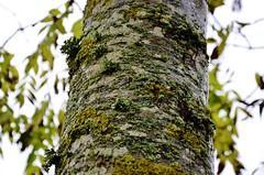 Around (Tinina67) Tags: autumn france tree green nature moss bokeh natur decoration tina around blatt gruen moos stamm karussel drehen rundherum tinina67