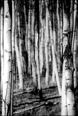 "A Path Less Taken (SmokinToast) Tags: show travel family blue light sunset summer wallpaper portrait sky bw usa cloud sun abstract mountains newmexico santafe southwest color tree sexy art love nature beautiful pine composition america forest canon dark landscape photo cool interesting friend perfect colorful dof shot dynamic sweet bokeh toast awesome scenic picture explore telephoto photograph american 5d glowing aspen overlook smokin 2012 iphone compose ipad coolshot ""pictureperfect"" ""markii"""
