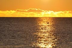 bird in sunrise (Nijule) Tags: morning sky orange cloud canada bird fall silhouette sunrise automne landscape nikon qubec nuage paysage oiseau contrejour 2012 matin leverdesoleil cormoran gaspsie d90 perc