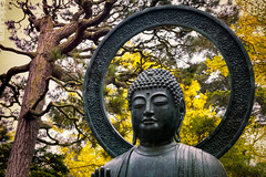 San Francisco (Eddie 11uisma) Tags: sanfrancisco california fall buddha japaneseteagarden