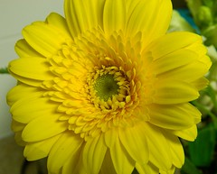 You will never find time for anything. If you want the time, you must make it. (careth@2012) Tags: daisy beautifulflowers unforgettableflowers flowersonflickr thebestofunforgettableflowers