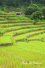 PhamonVillage-DoiInthanon-ChaengMai-Trip_By-P r i m t a a_E10886166-023