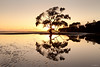 Nudgee Beach 4 (Jesse4870) Tags: morning light tree beach sunrise reflections airport sand mud south australia brisbane east flats swamp queensland mangroves nudgee