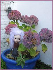 Martha & the hydrangea