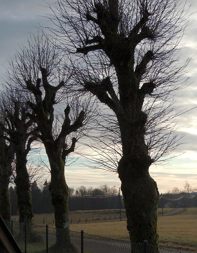 Lopped trees