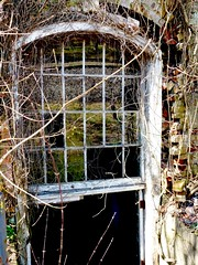 Basement window (sharon'soutlook) Tags: window reflections vines factory abandonedbuilding