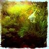 Fish (*Melody*) Tags: fish weeds tank tropical neontetra platinumangelfish
