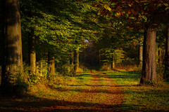 another season (bernd obervossbeck) Tags: autumn trees tree leaves forest path laub herbst wald bume baum mnsterland weg coloursofautumn mygearandme mygearandmepremium