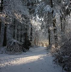 Winter walk (m.mcgoldrick) Tags: sun snow forest beams