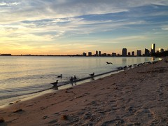 Miami Skyline from Key Biscayne Beach (miamism) Tags: ocean sunset sky orange beach skyline palms sunsets palmtrees keybiscayne miamiviews miamiskyline miamisky keybiscaynebeach keybiscaynesunset miamisunsets keybiscaynesunsets