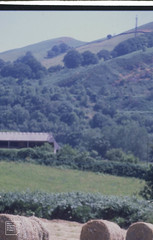 Ynys y Gau barn. Craig yr Allt from upper hay field, 11/07/99 (Mary Gillham Archive Project) Tags: st1184 wales 11071999 14528 1999 gwaelodygarth
