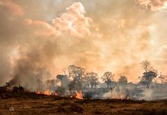 Acre em Chamas (Liz Felipe) Tags: fire season weather smog hot acre