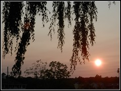 Sunset & Silhouette - Photo Taken by STEVEN CHATEAUNEUF On July 20, 2016 (snc145) Tags: summer seasons sky sun sunset trees sihouette dusk chelmsford massachusetts usa photo nature stevenchateauneuf pretty beautiful landscape scenery pink black awesomeshot autofocus soe flickrunitedaward fun thisphotorocks