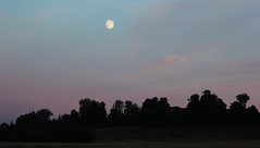 Moon light (ekaterina alexander) Tags: moon light summer night tree trees woodland landscape ekaterina england alexander sussex nature photography pictures wood forest