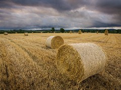 Harvest Time (Damian_Ward) Tags: photography damianward damianward haybale hay straw bales wheat field countryside rural fields harvest harvesttime rotobales ford buckinghamshire bucks