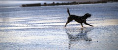 Ghost Dog... (antonychammond) Tags: dog abstract abstraction ghost spirit beach sea reflection silhouette