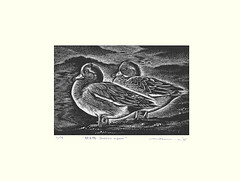 Eurasian wigeon (Japanese Flower and Bird Art) Tags: bird eurasian wigeon anas penelope anatidae mitsuru nagashima modern intaglio print japan japanese art readercollection