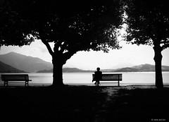 enjoy itself (Ren Mollet) Tags: zug zugersee zuiko street lake lac renmollet streetphotography silhouette trees man enjoy