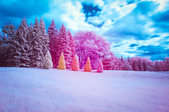 The Enchanted Five (jrseikaly) Tags: montral qubec canada ca infrared ir multicolor color colorful nature jack seikaly montreal botanical gardens outdoor plant tree trees