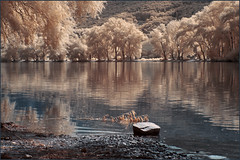 2016 09 09 Rhein bei Lorch IR - 20 (Mister-Mastro) Tags: rhein lorch water river fluss reflection reflexion reflektion trees arbres bume ir infrared 680nm