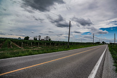 IMG_3125 (lnoelle89) Tags: roads wine country notl niagara niagaraonthelake colours colors blue green yellow roadpaint lines vines wines grapes grape vqa clouds details clarity canon6d canon canonphotography canonofficial canada canoncanon scenery