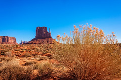 Desert Flowers (danielacon15) Tags: coloradoplateau monumentvalley navajotribalpark unitedstates desert landscape nature traveldestination americansouthwest colorful naturalmonuments travel utah erosion mesas outdoors golden flowers red earth blue sky