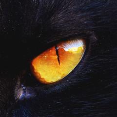 Eye of the cat (___matzo___) Tags: eye occhio gatto gatti cat cats animals animali