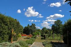 IMG_7768a (judyflo1) Tags: garden latesummer flowers landscape sky clouds cloudless sulphur