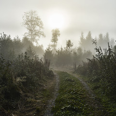 Morning Foog (www.online-photo-gallery.com) Tags: nebel foog weg path kontrast contrast nature natur
