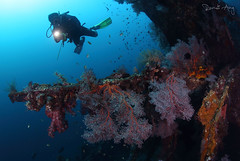 Wreck (Randi Ang) Tags: liberty wreck libertywreck usatliberty tulamben bali indonesia underwater scuba diving dive photography wide angle randi ang randiang canon eos 6d fisheye 15mm