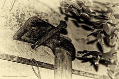 Pensione - Pension (immaginEmozioni Photography) Tags: bw italy white black reflection canon country nail na campagna e hoe 7d suggestion retired bianco nero tool impression retirement agricultural pension 2012 aposentadoria houe kapa chiodo retraite riflessione pensione pensionamento aixada motyka attrezzo enxada jubilacin impressione agricolo pensioen schoffel azada przejcie  ruhestand pensionering suggestione  jubilaci n emeklilik dalje  aitzurra penzionisanje     pensjonering immaginemozioniphotographycanon immaginemozioniphotography pensiya erretiro     nyugdjazs  dchodu emerytur