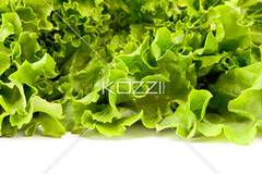 Lettuce Leaves on White (gregfood8877) Tags: plants green nature closeup leaf healthy natural tasty vegetable fresh delicious crisp lettuce health organic agriculture botany leafy salads ness nutrition nutritious ingredient romainelettuce