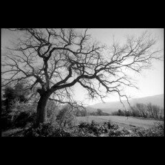 Stormy tree (Giorgio Verdiani) Tags: winter sky blackandwhite italy tree slr canon landscape university italia campania ss universit wide sigma wideangle workshop cielo firenze fujifilm af inverno eos5 paesaggio 100asa biancoenero 2012 superwideangle seminario 100iso 14mm ss100 romagnano irpinia buccino facoltdiarchitettura grandangolare alberro supergrandangolare nuoviruoliperterritoriantichiinabbandono