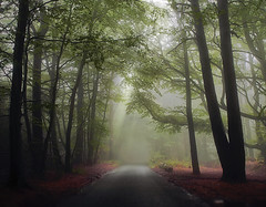 Mist the turn (Roan Manion Images) Tags: uk morning autumn england sunlight mist tree art fog forest peace eerie devon rays countrylane luton roan redleaves teignmouth manion greenwaylane featuredonadidapcom coppercloudsilvernsun roanmanionphotography mistandtree countrylanemist roanmanionimages