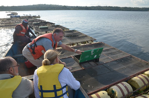 Source of the Nile (SoN) tilapia cages on Lake Victoria, Uganda. Photo by Jens Peter Tang Dalsgaard, 2012.