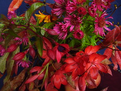Oct2012 313 Autumn colours (monica_meeneghan) Tags: flowers autumn stilllife colour leaves perfectpetals mywinners crazyaboutnature artofimages naturescarousel artphotographerssalon blinkagain