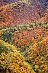 Autumn mosaic (elosoenpersona) Tags: autumn mountains colour colors forest de spain asturias bosque otoño cordillera montañas cangas narcea cantabrica muniellos moal