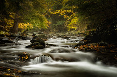 Rainy Day on Bash Bish Brook (MDanielsonPhoto) Tags: autumn fall water forest ma stream massachusetts foliage brook cascade mountwashington bashbishbrook