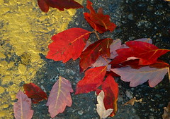 ON THE MARK (ikan1711) Tags: autumn red fallleaves fall yellow pavement autumnleaves redleaves fallscenes yellowline colourfulleaves beautifulleaves autumndays autumnscenes pavinglines
