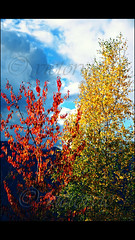 ... red, yellow, green and blue .... (VICTOR VIC) Tags: red mountain color tree verde green nature yellow azul montagne rouge google nikon flickr colours united vert vermelho bleu explore amarillo ciel vermell blau fusion nuage arbre andorra d90