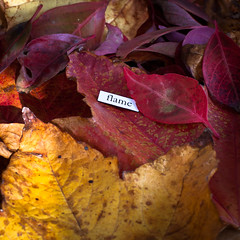 flame (penwren) Tags: autumn red colour fall leaves yellow word flame lettering shape