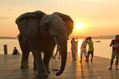 Elephant in Sunset (shuffle.photo) Tags: sunset sun lake elephant pier garda sirmione