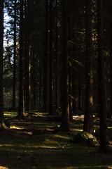 Mrk skog (Vincius Assis) Tags: mushroom oslo norway forest canon dark norge woods north hunting bosque noruega caca cogumelo scandinavia 1785mm peninsula floresta amanita escuro sognsvann muscaria escandinavia escura fluesopp 60d soppjakt