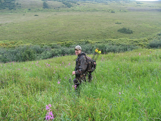 Alaska Bear Hunt and Moose Hunt - Dillingham 24