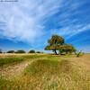 Desert Landscape  . . . . من روض قطر الجميله (arfromqatar) Tags: nikon qatar قطر nikond3x عبدالرحمنالخليفي arfromqatar صورمنقطر qatar2022fifaworldcup abdulrahmanalkhulaifi البيئهالقطرية