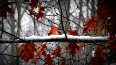 Halloween Snow (Lin_Woods) Tags: autumn orange snow fall october autumnsnow 52weeks2012