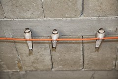 IMG_3546 (francois f swanepoel) Tags: birds fly babies young swift feed swallows swifts