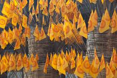 (Iigo Fdz de Pinedo) Tags: viaje color asia religion tailandia chiangmai oriente naranja vacaciones banderas cultura templo budismo colornaranja culturaasiatica